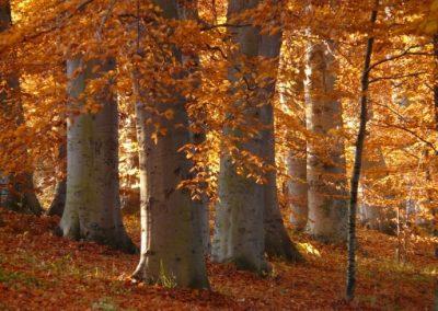 au bois de luc